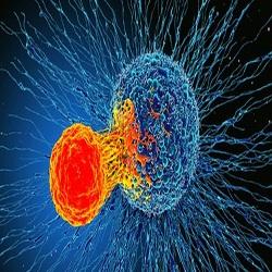 A descoberta sobre o sistema imunológico que pode ajudar a combater todos os tipos de câncer