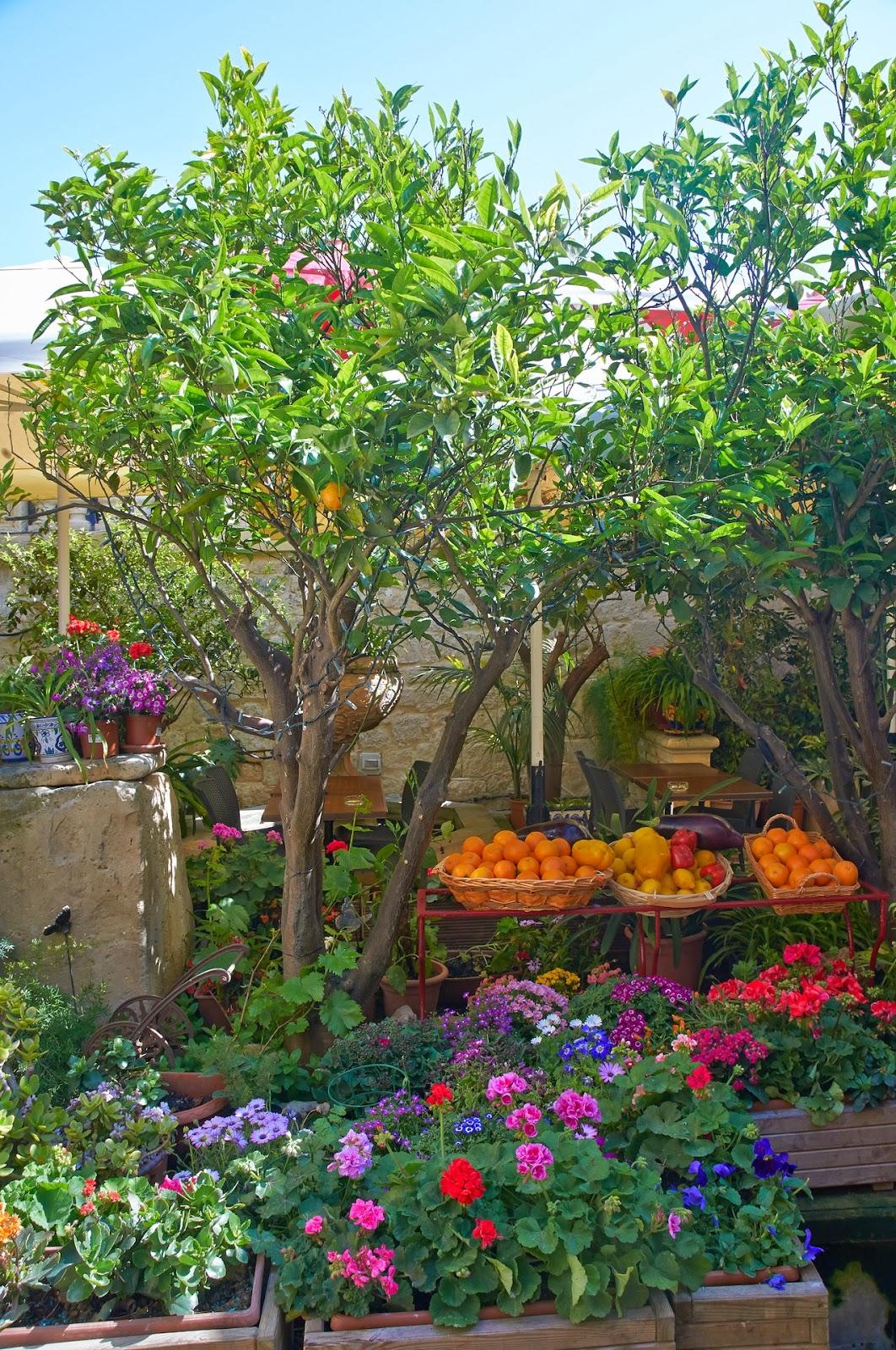 drzewka pomarańczowe na Malcie