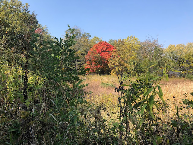 Fall colors emerge at Lincoln Marsh Natural Area in Wheaton, Illinois.