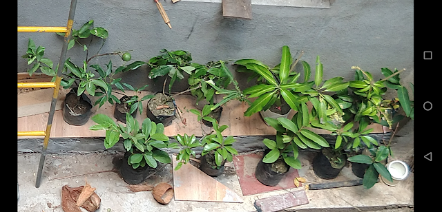 Fruit Trees to Plant