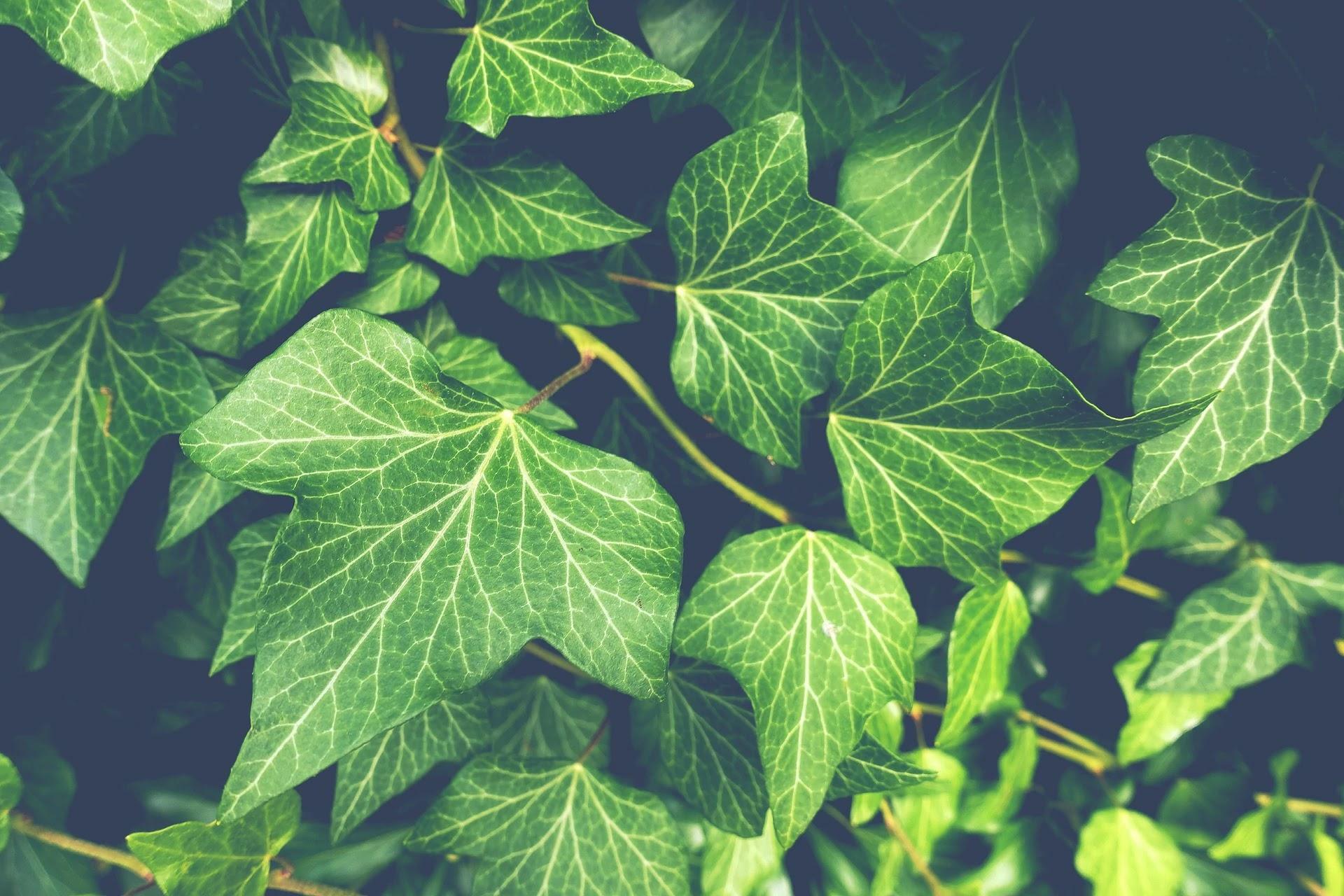 صور ورق  شجر اخضر