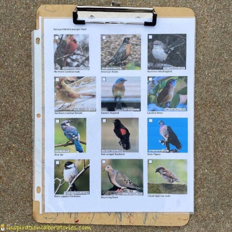 backyard bird scavenger hunt for kids