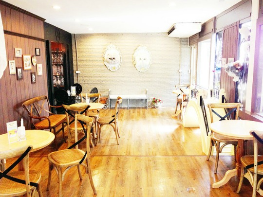 cat cafe interior