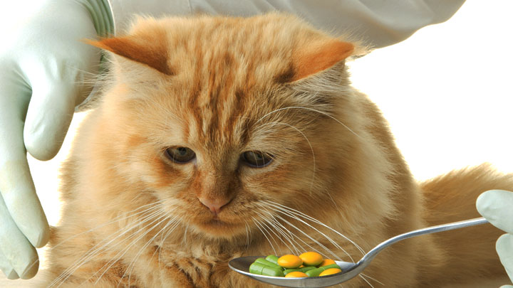 best-vitamins-for-cats