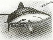 Soal USBN SD 2019 2020 tentang Simbiosis pada hiu dan remura