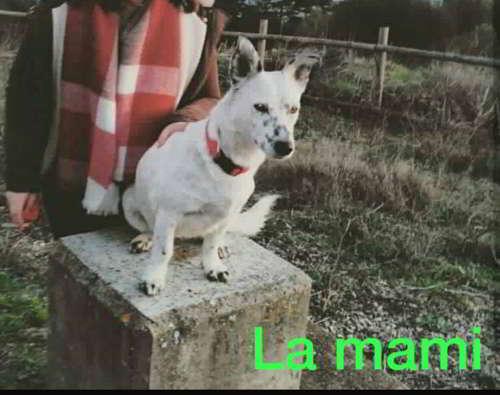 cachorros talla pequena mediana 3