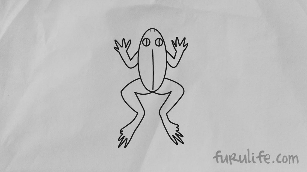 How to draw frog step by step