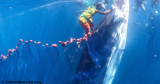 Whale got Stuck in a Net