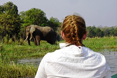 Elephant at the side of the Zambezi River