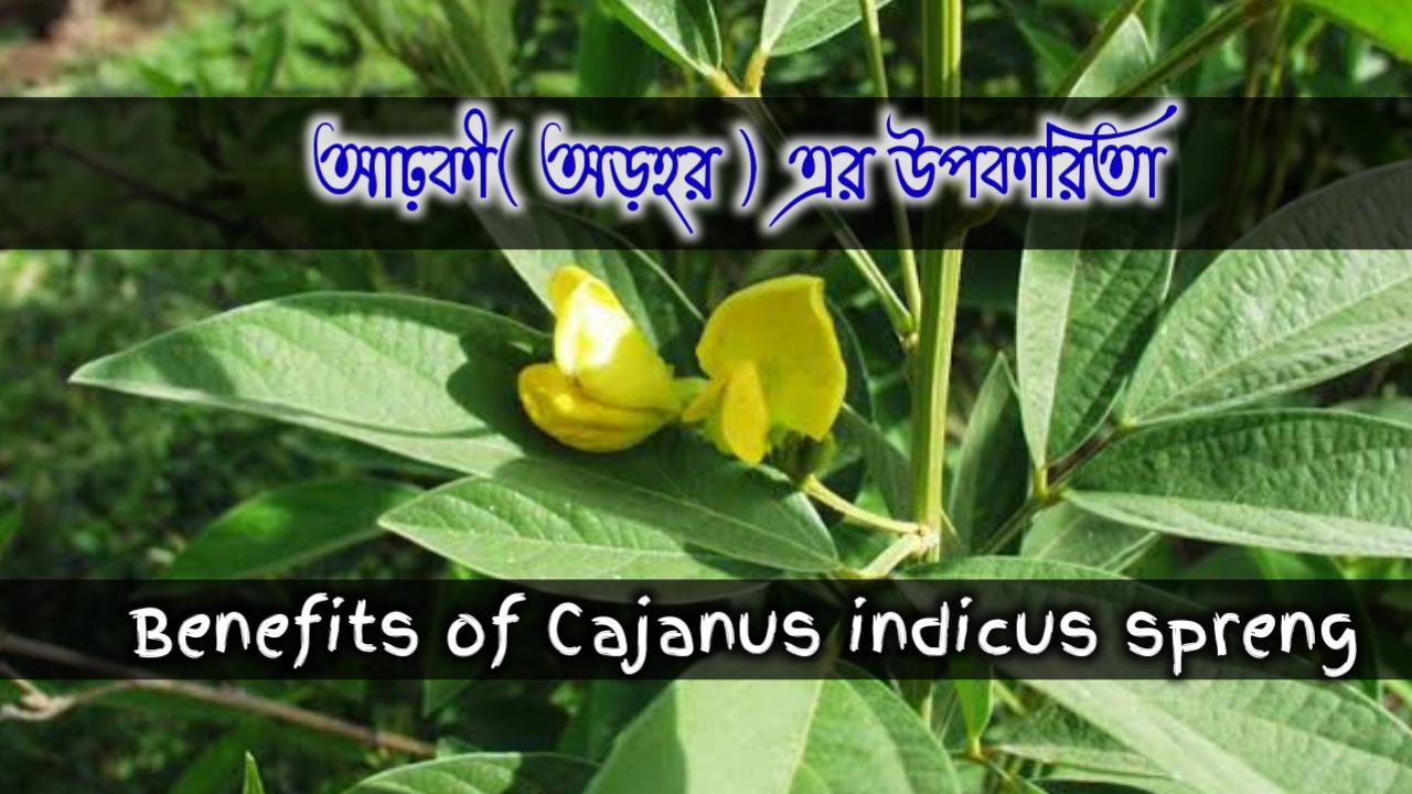 Cajanus indicus spreng