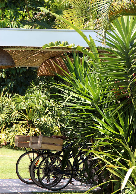 Three bicycles with a wooden basket, parked under a pergola next to lush green palm trees.