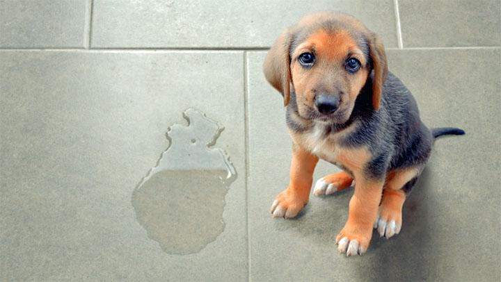 disobedient dog training