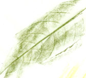 LEAF SKETCH SHADE