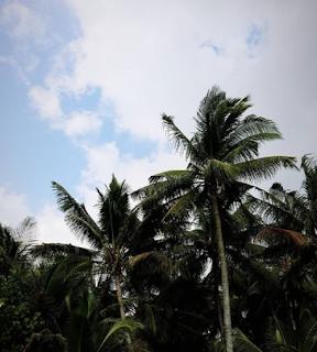 pantai kelapa tuban by cahyadwip