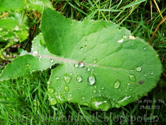 Green Leaf and Dewdrops