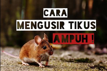 Mudah Bangat, Cara Mengusir Tikus di Rumah Efektif 100%