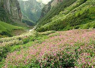 valleyof-flower-utta