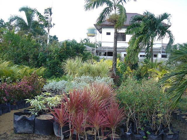 Tabang Guiguinto A Haven For Gardeners Filipina Explorer