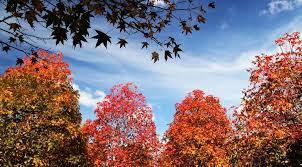 Estação Outono começa nesta terça-feira, no hemisfério sul