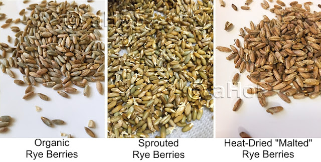 Rye Grain Sprouted and Malted