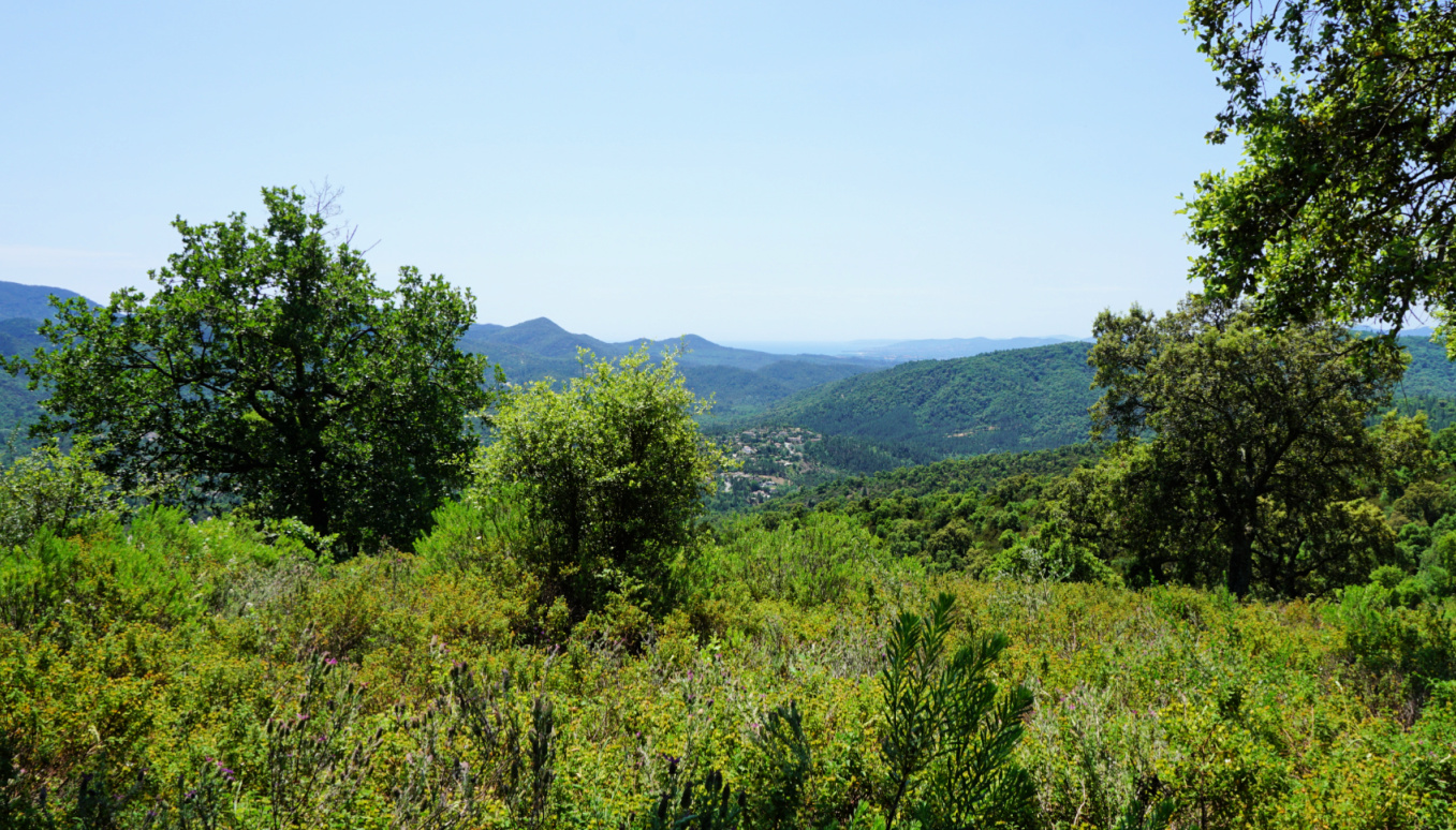 Esterel and the Med seen from trail