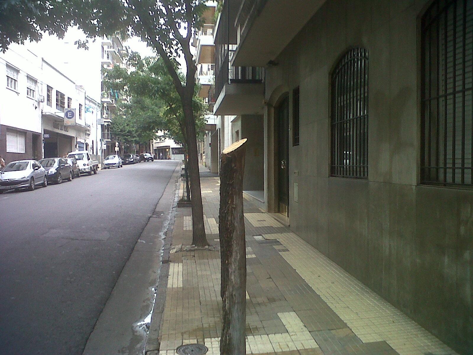 d9cb4d30a LOS ÁRBOLES DE LAS VEREDAS