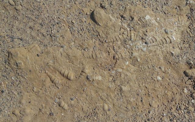 Fósiles en el desierto de Paracas