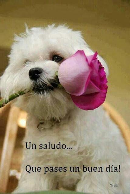 hermoso perrito con flor dia del amor