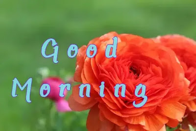 Good Morning pictures with beautiful flowers