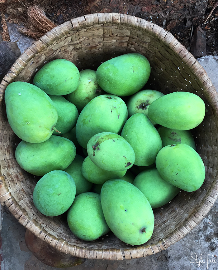 Image of a basket full of green mango fruit in Goa