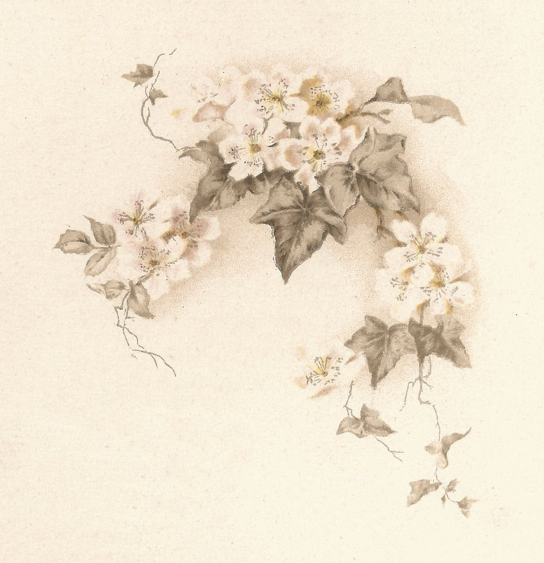 Antique Images: Free Flower Graphic: Vintage White Flowers ...  Antique Images:...