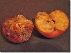 Apel setelah didengarkan al quran dan musik