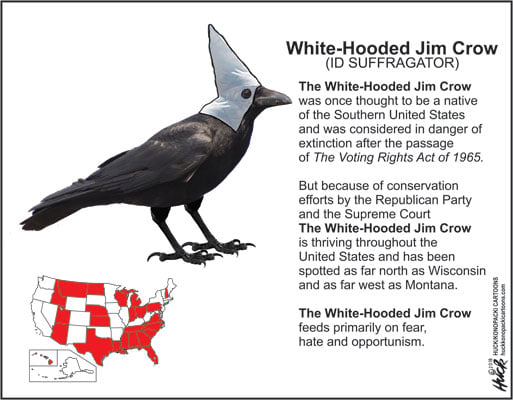 Image of a crow wearing a white hood, accompanied by a map of the United States showing the states that voted for Donald Trump in 2020.  Text:  White-Hooded Jim Crow (ID SUFFRAGATOR).  The white-hooded Jim Crow was once thought to be a native of the Southern United States and was considered in danger after the passage of The Voting Rights Act of 1965.  But because of conservation efforts by the Republican Party and the Supreme Court, the White-Hooded Jim Crow is thriving throughout the United States and has been spotted as far north as Wisconsin and as far west as Montana.  The white-hooded Jim Crow feeds primarily on fear, hate, and opportunism.