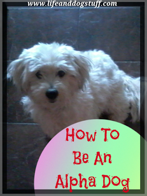 How To Be An Alpha Dog