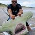 Homem captura tubarão-martelo de quase 4 metros