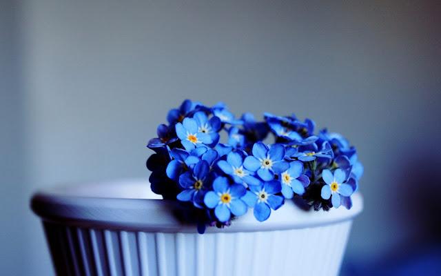زهور زرقاء