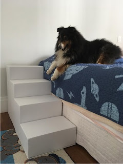 cães grandes cama box