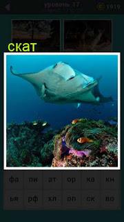 в воде плавает рыба скат в игре 667 слов 17 уровень
