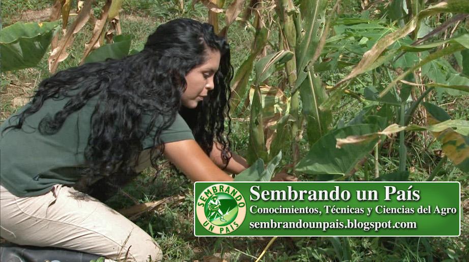 Joselyn Moreno realizando control de malezas manual
