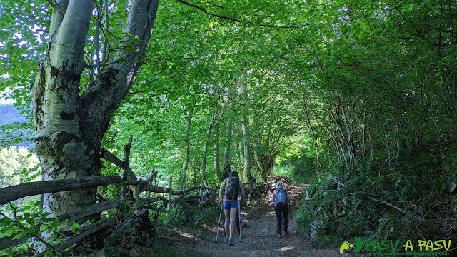 Zona de bosque camino a la Foz de Palombar