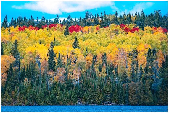 Voimakkaat ruskan värit metsässä - keltaista ja punaista isoina alueina.