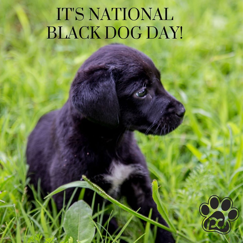 National Black Dog Day Wishes Lovely Pics