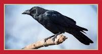 crow in a dream by al-Nabulsi