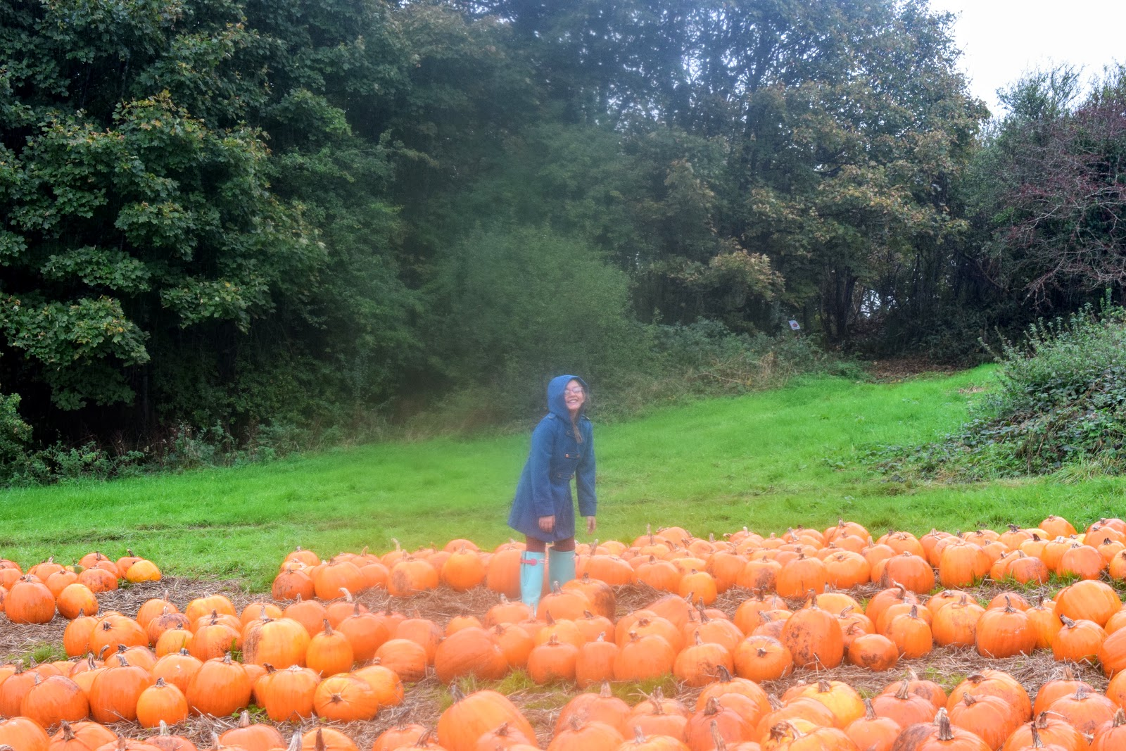 , Pumpkin Picking and Vegan Pumpkin Pie Recipe / Halloween 2016