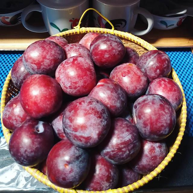 mengeringkan buah plum untuk diet