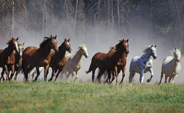 الخيول أنواعها و خصائصها