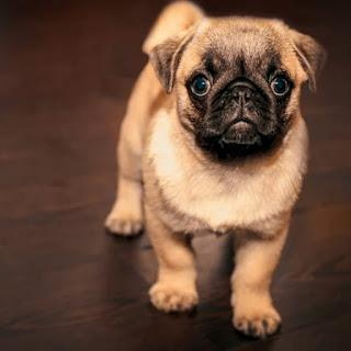 whatsapp cute dog dp images