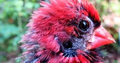 Manpaat Dan Harga Terbaru Obat Kutu Burung Saat Ini Paling Lengkap