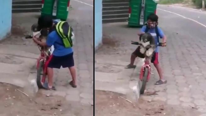 Un niño cuida a su perrito y le pone una mascarilla