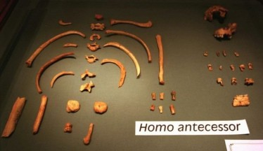 Ανακαλύφθηκε γενετικό υλικό 800.000 ετών στα δόντια κανίβαλου